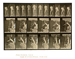 Animal locomotion. Plate 394 (Boston Public Library).jpg