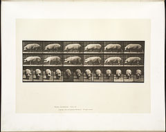 Animal locomotion. Plate 673 (Boston Public Library).jpg