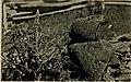 Animal snapshots and how made (1905) (14775142923).jpg