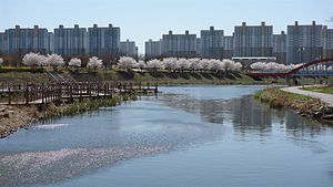 Ansan Canal, South Korea