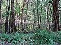 Applūdis mežs 001.jpg