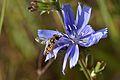 Araignées, insectes et fleurs de la forêt de Moulière 2 (28843011940).jpg