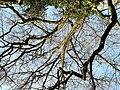 Arboretum Zürich 2012-03-28 16-42-15 (P7000).JPG