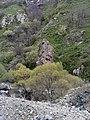 Arpa canyon Emma YSU (1).jpg