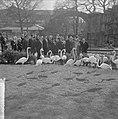 Artis 125 jaar dierentuin Flamingos, Bestanddeelnr 915-1165.jpg