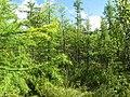 Asinovsky District, Tomsk Oblast, Russia - panoramio (120).jpg