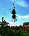 Athina Gr - panoramio.jpg