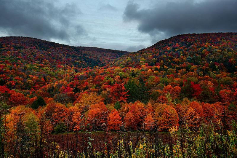 File:Autumn-mountain-foliage - Virginia - ForestWander.jpg
