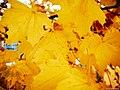 Autumn 2015 (127915499).jpeg