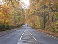 Autumn leaves over A30 London Road, Camberley - geograph.org.uk - 1041278.jpg