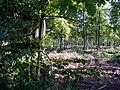 Autumnal woodland - geograph.org.uk - 267566.jpg