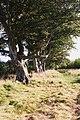 Avenue of Trees - geograph.org.uk - 995390.jpg
