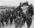 Axis prisoners of war are herded out of the city as Allied armies enter Tunis. - NARA - 195472.tif