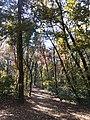 Bělehrad, Voždovac, Banjička šuma II.jpg