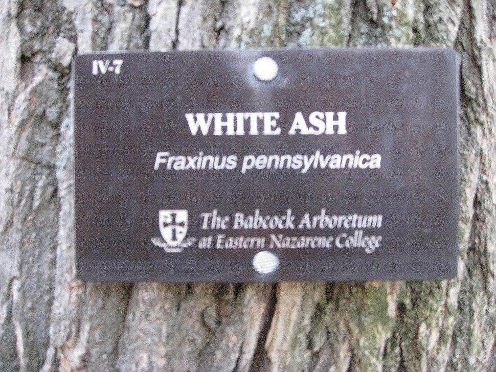 Babcockarboretumtree