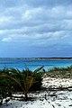 Bahamas 1989 (716) San Salvador (25980629372).jpg