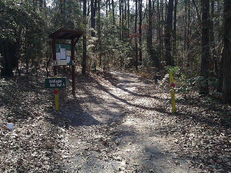 File:Bald Eagle Nest Trail at South Toledo Bend State Park.jpg