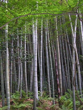 Señales de tránsito realizadas con bambú (Países Bajos)