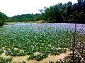 Bangladesh (28).jpg