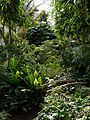 Barbican Conservatory on 7 Aug 2014 02.jpg