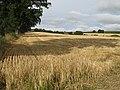 Barley stubble, Fifebanks - geograph.org.uk - 551294.jpg