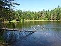 Beaver Pond - panoramio (5).jpg