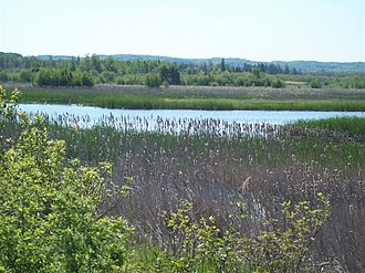 Betsie River - Betsie River wetland near Elberta, MI
