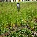 Bielany-Wroclawskie-080530-06.jpg