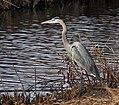 Big Bosque Bird (24988457758).jpg