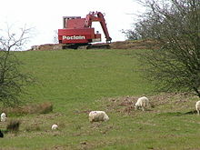 Big plant and sheep - geograph.org.uk - 781001.jpg