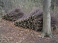 Birch twigs in bundles - geograph.org.uk - 369743.jpg