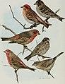 Bird-lore (1914) (14732322876).jpg