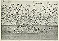 Bird-lore (1917) (14732692136).jpg