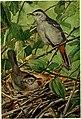 Bird lore (1913) (14747149864).jpg