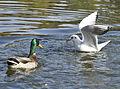 Birds (6240127790).jpg