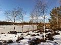Birken im Weidmoos Mitte Februar (2).jpg