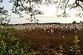 Björkby-Kyrkvikens naturreservat på våren.jpg