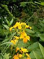 Blütenpflanze0492.JPG
