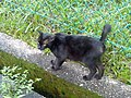 Black kitty in singapore.jpg