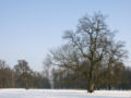 Blatná (CZE) - park in winter.jpg