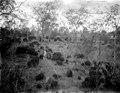 Blocksamlingar. (2 flätar liten). S-te Mariew de Marovoay. Madagaskar - SMVK - 021881.tif