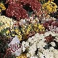 Bloemen, Bestanddeelnr 254-7540.jpg