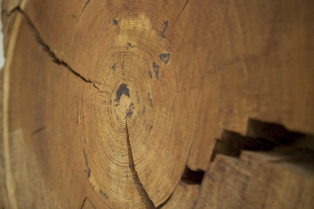 Blok hout met jaarringen - Unknown - 20533996 - RCE.jpg