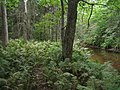 Bloomfield Provincial Park IMG 8229 (1848210415).jpg