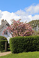 Blossoming tree with cottage on Downhall Road at Matching Green, Essex, England.jpg