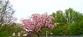 Blossoms 004 2.JPG