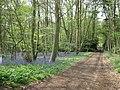 Bluebell Wood, near Ambarrow - geograph.org.uk - 1258353.jpg