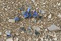 Blues and Skippers - Maviler ve Zıpzıplar 01.jpg