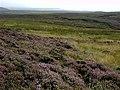 Boar Flat - geograph.org.uk - 48756.jpg