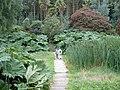 Bog Garden - geograph.org.uk - 47396.jpg
